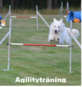 Öppen agilityträning @ Lidköpings Brukshundklubb