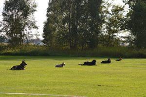 Skotträning måndagar @ Lidköpings Brukshundklubb