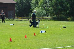 Öppen rallylydnadsträning vår-20 @ Lidköpings Brukshundklubb