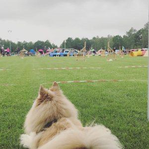 Agilityträff med fika, träning & info! @ Lidköpings Brukshundklubb