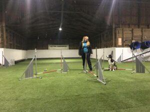 Träningstävling Agility - hopp @ Lidköpings Brukshundklubb
