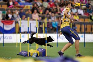 Agilitykurs 24-25/8 @ Lidköpings Brukshundklubb