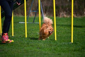 Öppen agilityträning torsdagar @ Lidköpings Brukshundklubb