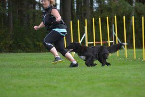 Agilitytävling - VÅRHOPPET! @ Götene Brukshundklubb