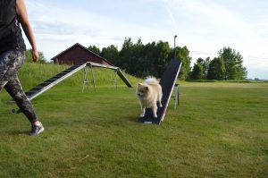 Nybörjarcupen Agility @ Lidköpings Brukshundklubb