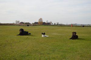 Gemensam skotträning i vinter @ Lidköpings Brukshundklubb